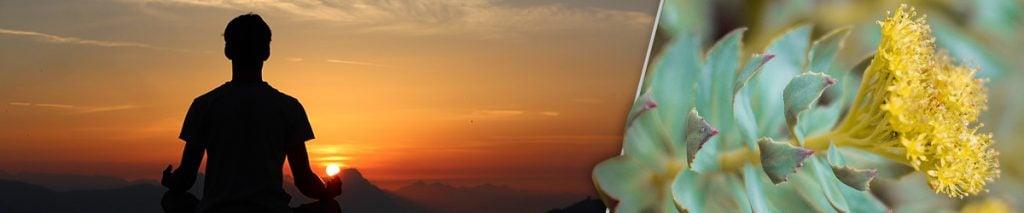a man meditation at sunset and a rhodiola herb